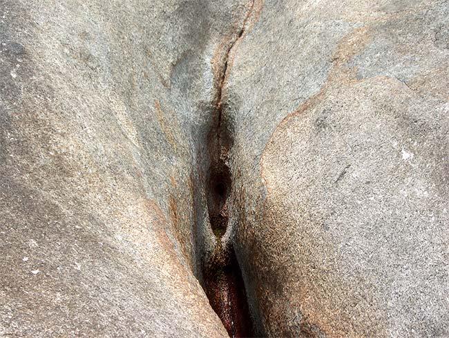 Половые органы бабок фото.
